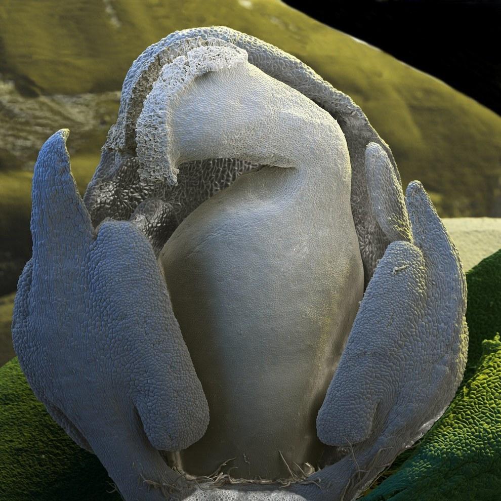 5. Эти инопланетные создания — цветок из рода Гиби?скус. [Нажмите на фотографию] .