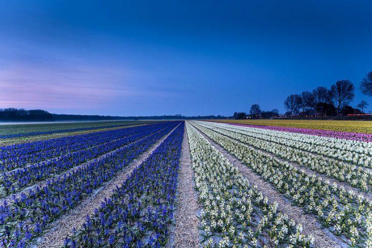 …весной…