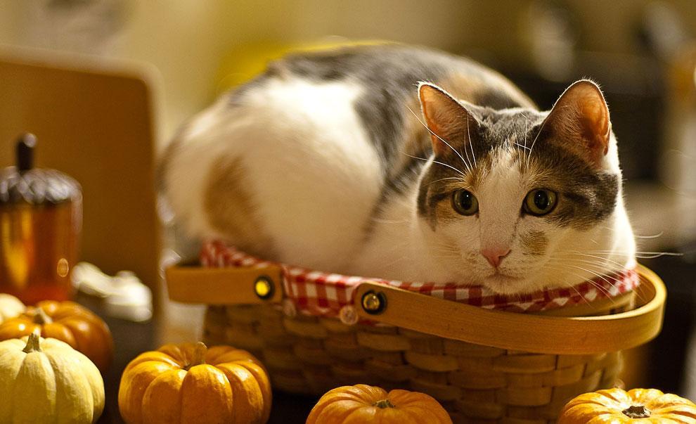 Даже самое маленькое из кошачьих совершенство. Леонардо да Винчи