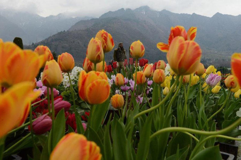 An Indian police officer walks in the Tulip Garden in Srinagar.