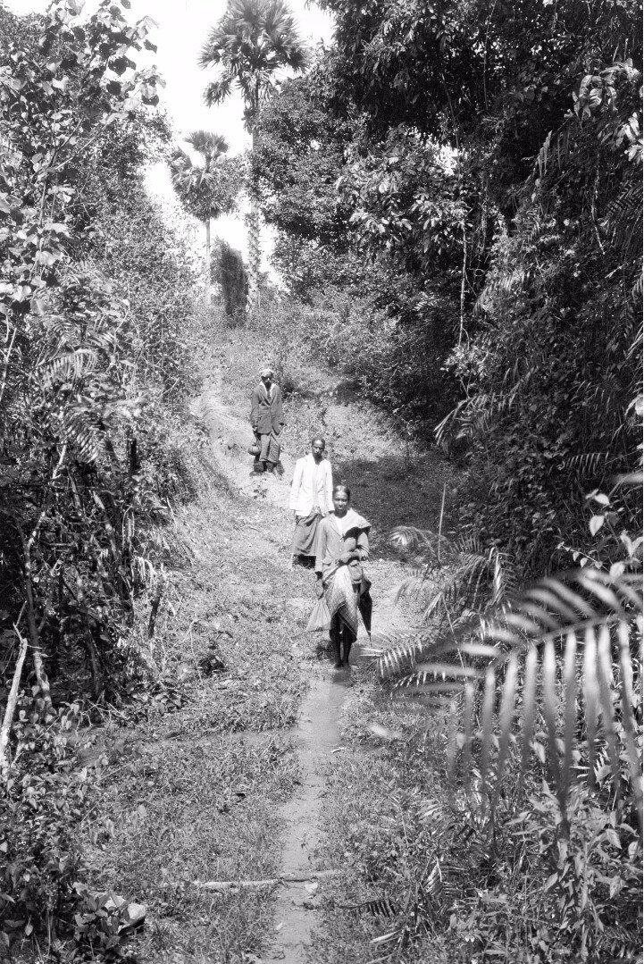 38. Деревня возле Медагамы по дороге в Бибилу (провинция Ува)