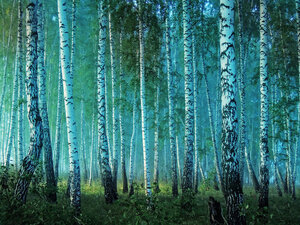 Лес просыпается