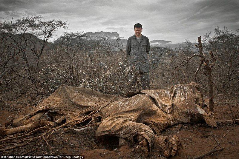 3. Пожар в тропическом лесу. Когда-то здесь паслись дикие козлы.