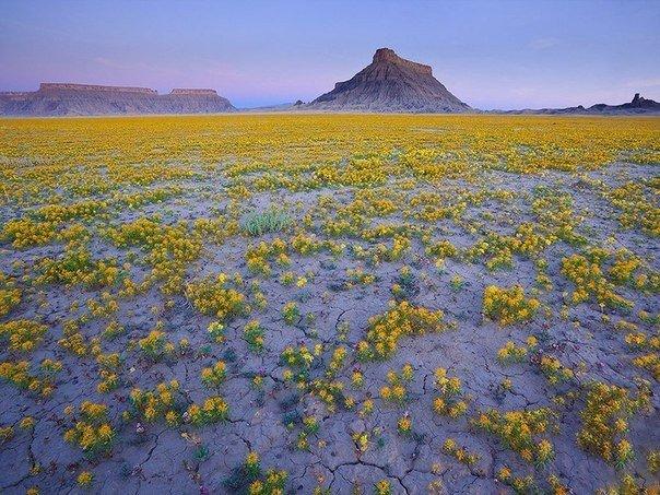 Чудеса природы дикого Запада