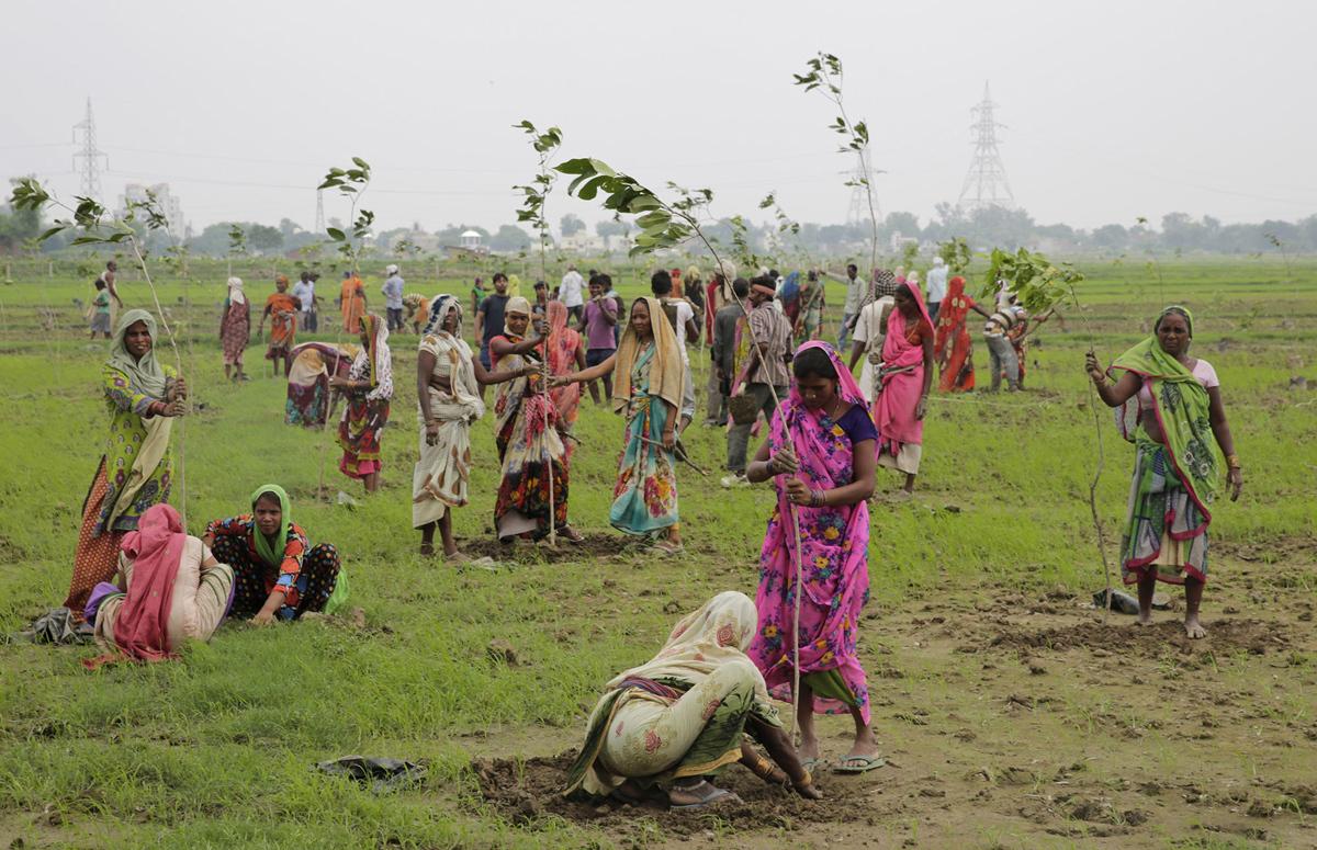 6. Женщины сажают молодые деревья на окраине Аллахабада, Индия, 11 июля 2016 года. Более 800 тысяч д