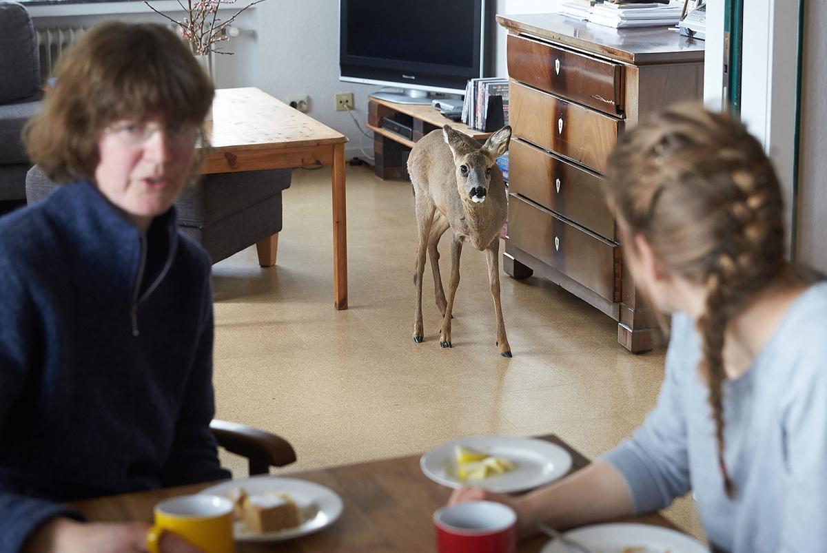 8. Слепой олененок Такома стоит в гостиной дома фермеров Маргарет Неллес и ее дочери Каролины в Герм