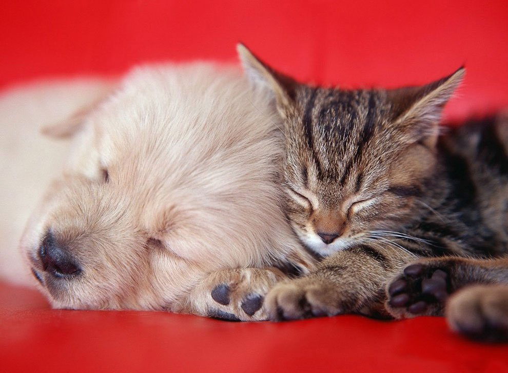 Иногда обругаешь кошку, взглянешь на нее, и возникает неприятное ощущение, будто она поняла все