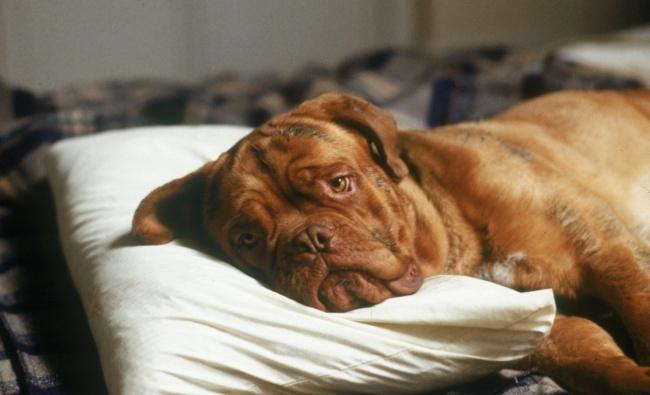 Животные отлично понимают, когда сними поступают несправедливо (2 фото)