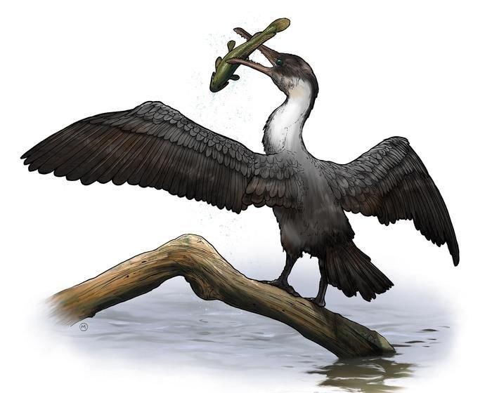 ВАрктике найдены останки древнейшей птицы