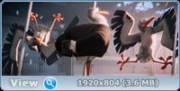 Аисты / Storks (2016/BD-Remux/BDRip/HDRip/3D)