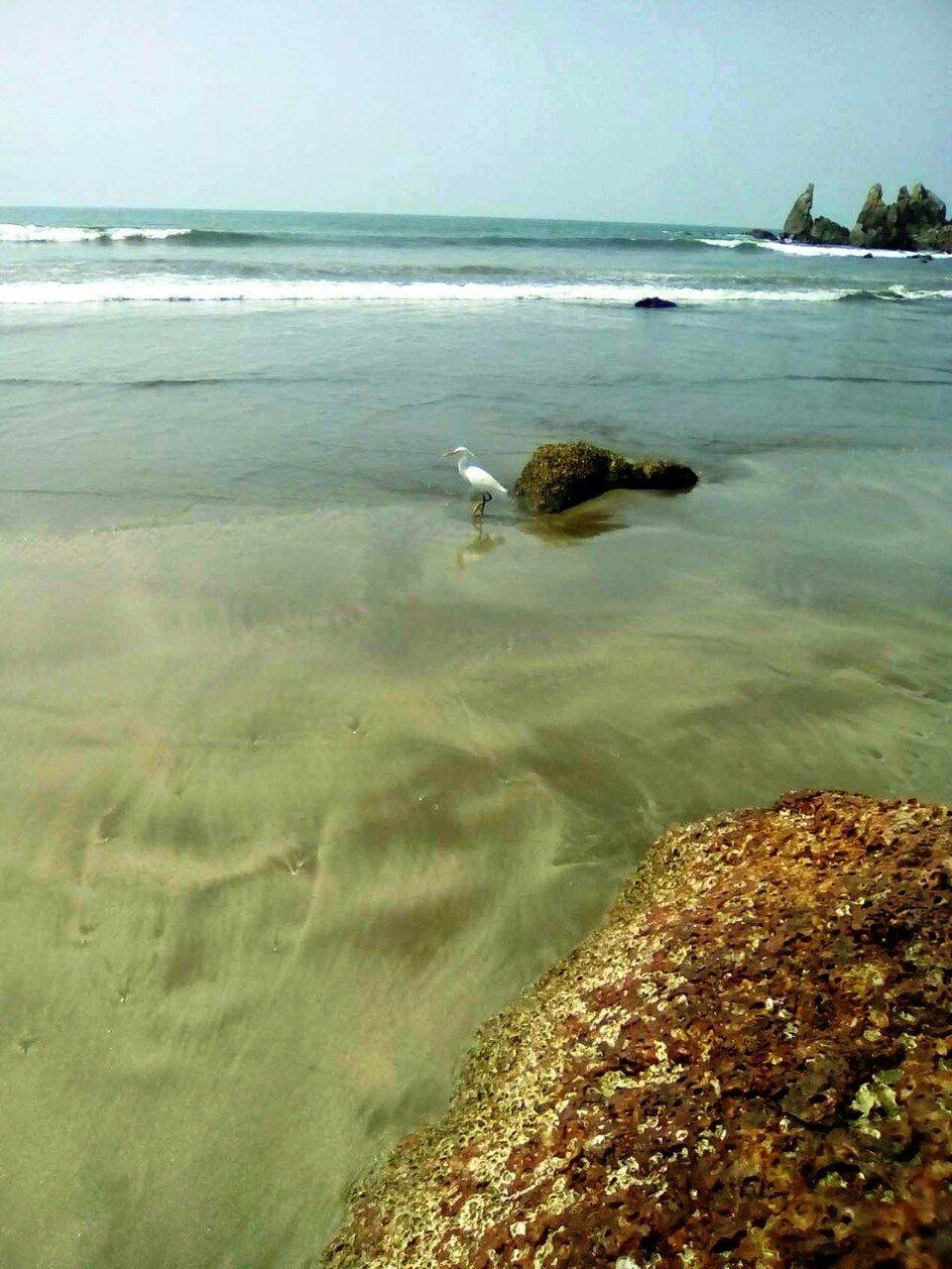 А я любуюсь морем.  Индия. январь 2017. Фотографии В. Лана.jpg