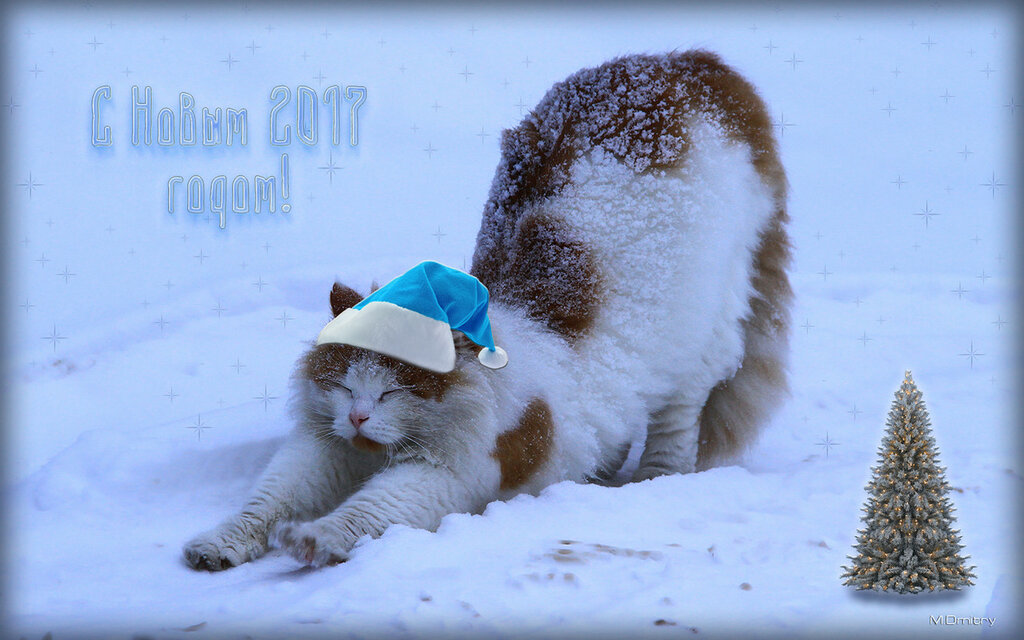 Кошки & Коты(2010)