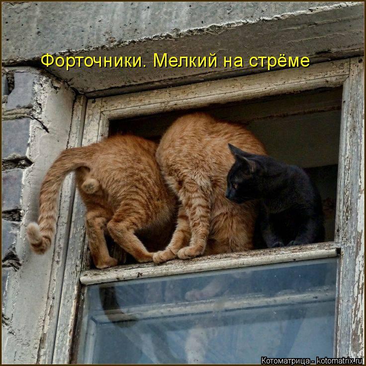 Вашему вниманию последняя свежая котоматрица осени