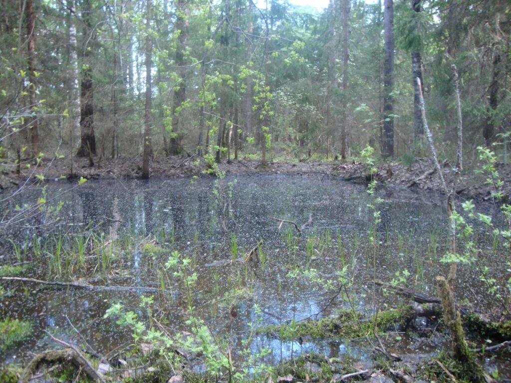 Лесной пруд.