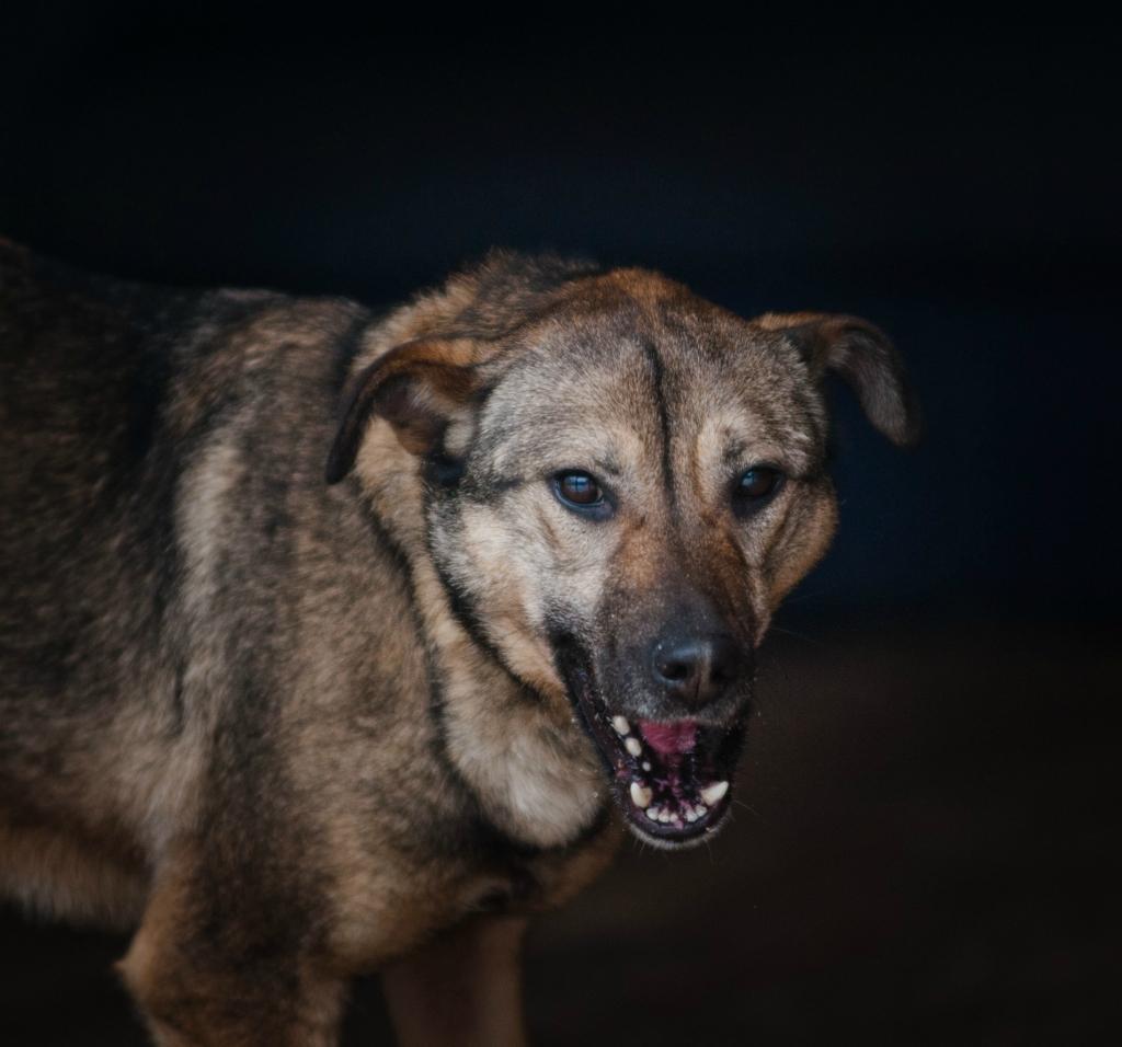 Глаша собака из приюта догпорт