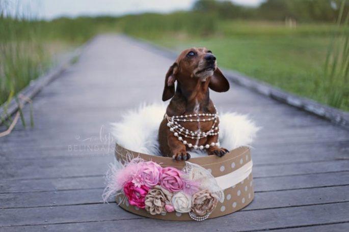 2. Клиентка заказала фотосессию для собак со дня на день ожидающих появление на свет маленьких детиш