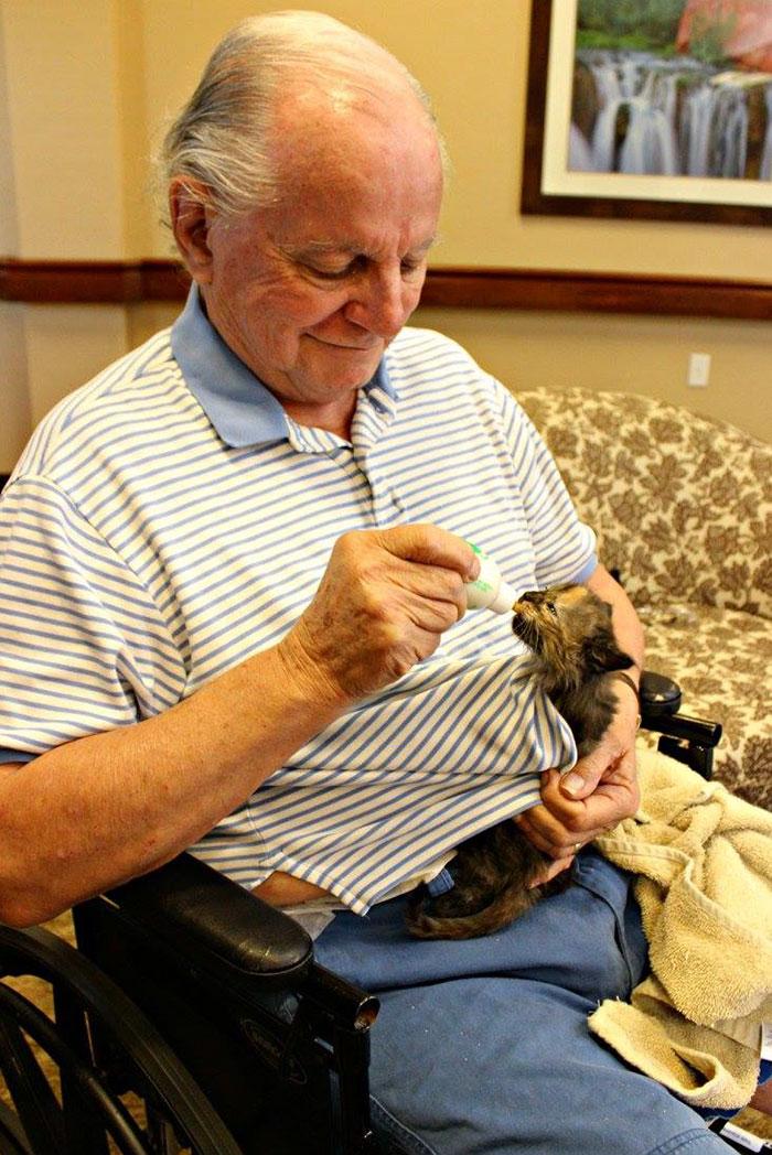 «Котята дали нам возможность облегчить это заболевание, которым страдают все наши обитатели».