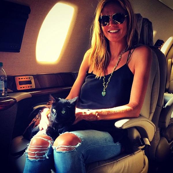 Певице Мэрайе Кэри не жаль никаких денег на развлечение своих собак. А их, ни много ни мало, целых с