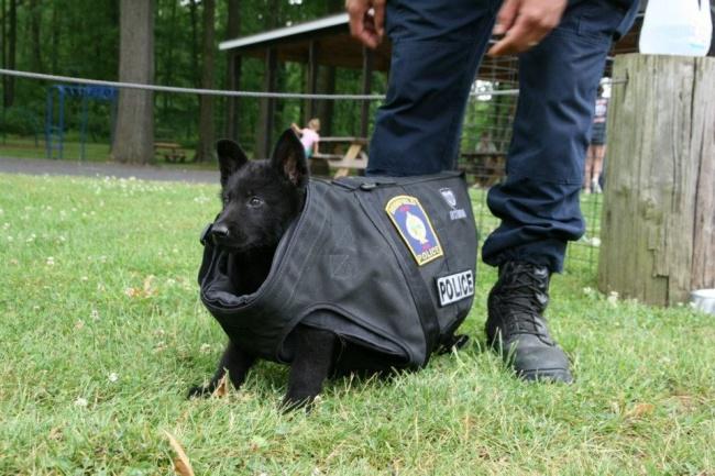 © Brimfield Police Department  Хотя эти щенки выглядят очень милыми, мыдолжны понимать: они д