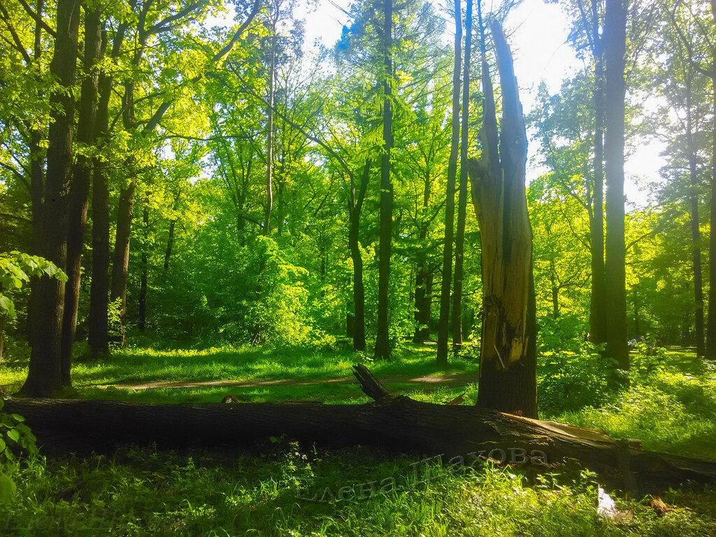 Тимирязевский парк-46 copy.jpg