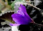 Senk's Big Bells (R.FollettD.-Senk)7.JPG