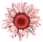 LH_Curious_Flower_009.png