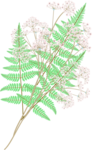 LH_Curious_Leaves_009.png