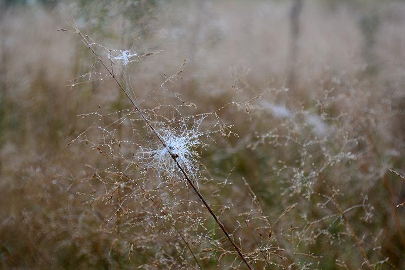 капельки трава 7.jpg