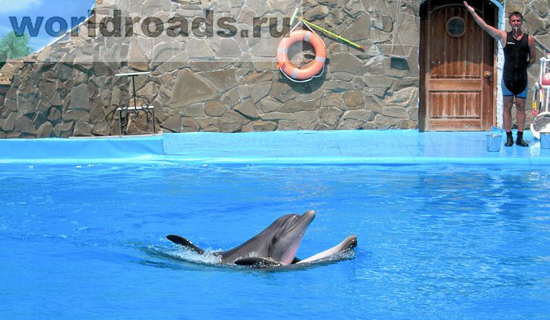 Дельфинарий Ейск