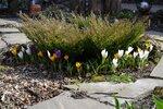 Весна в саду,  апреля 2017