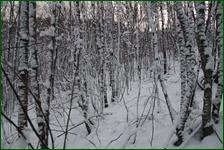 http://img-fotki.yandex.ru/get/197756/15842935.41d/0_f185c_aff2e24e_orig.jpg