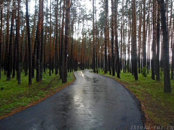 дорожка_в_сосновом_бору_dorozhka_v_sosnovom_boru