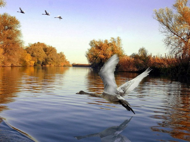 День Волги! Птицы открытки фото рисунки картинки поздравления