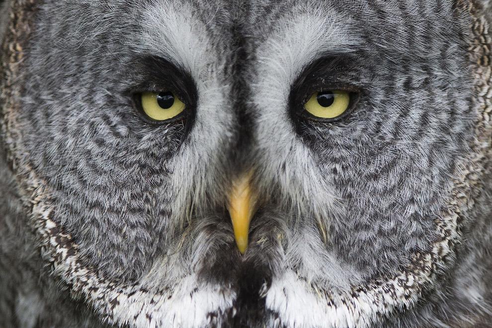 19. Фотография белой совы. Фотовыставка в Санкт-Петербурге. (Фото Alexander Demianchuk | Reute