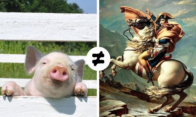 © depositphotos  © pixabay  Помнению французского правительства, назвать свинью именем