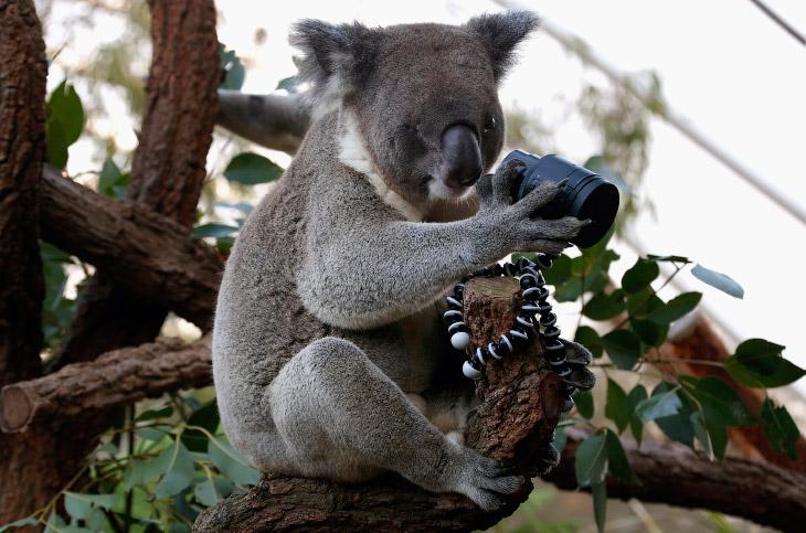 1. Позитивные обезьяны с острова Сулавеси . (Фото ):