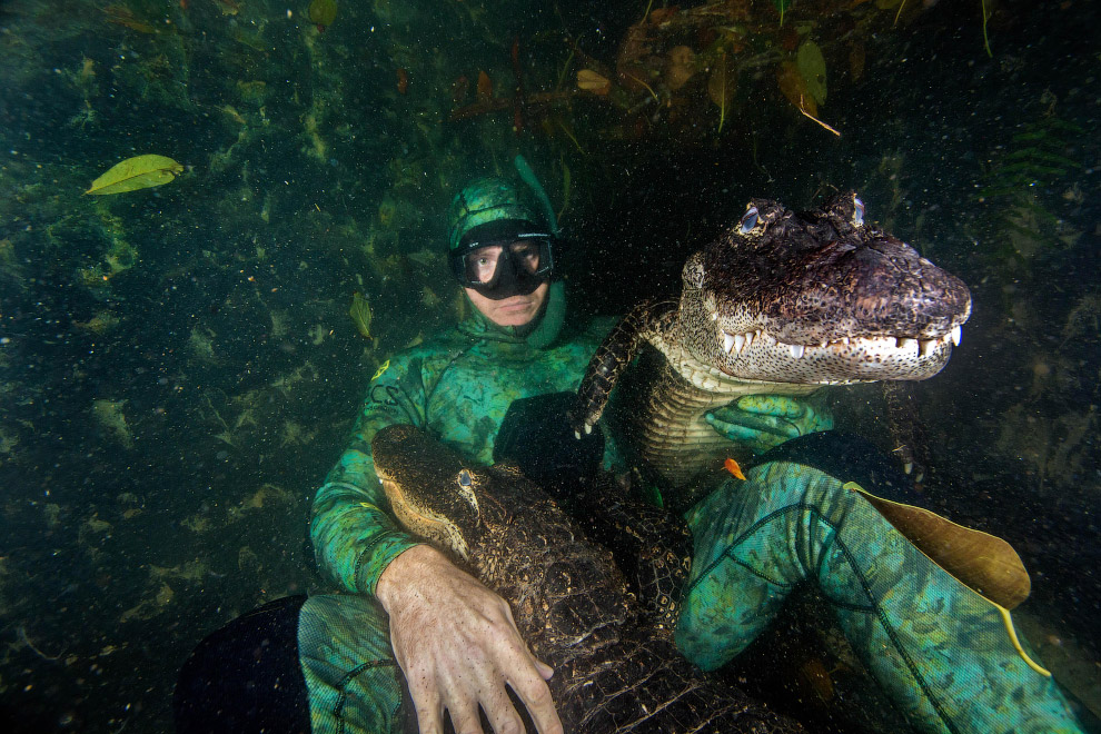 «Люди думают, что аллигаторы — бессмысленные убийцы, но если вы их понимаете и можете предсказать по