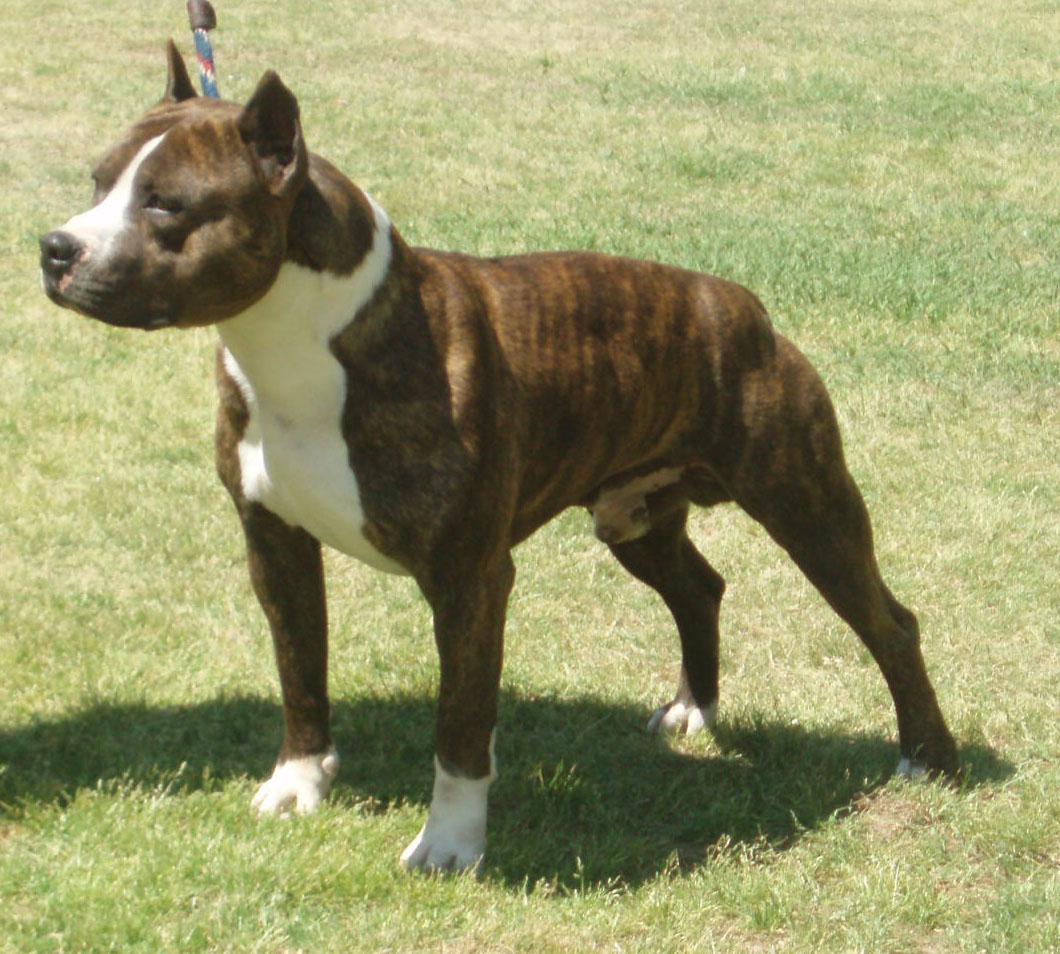 Выбор собаки средней породы (2 фото)