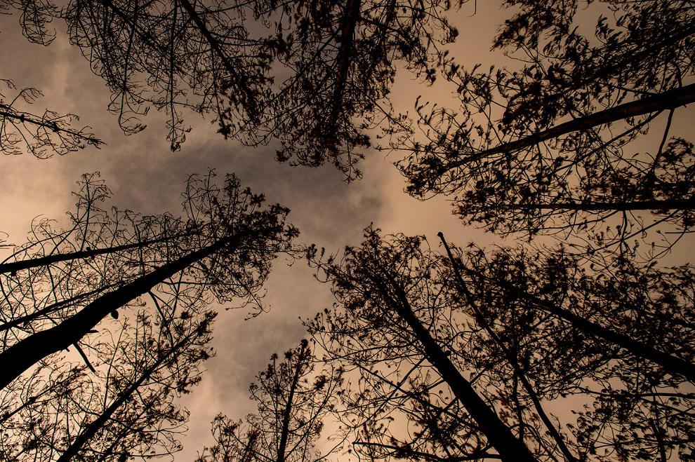 3. Чтобы быстрее восстановиться. лесу требуется помощь. А вот и рабочие-озеленители.