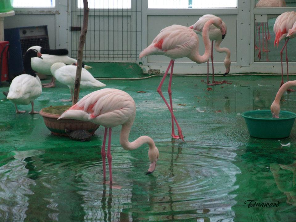 фламинго-3.jpg