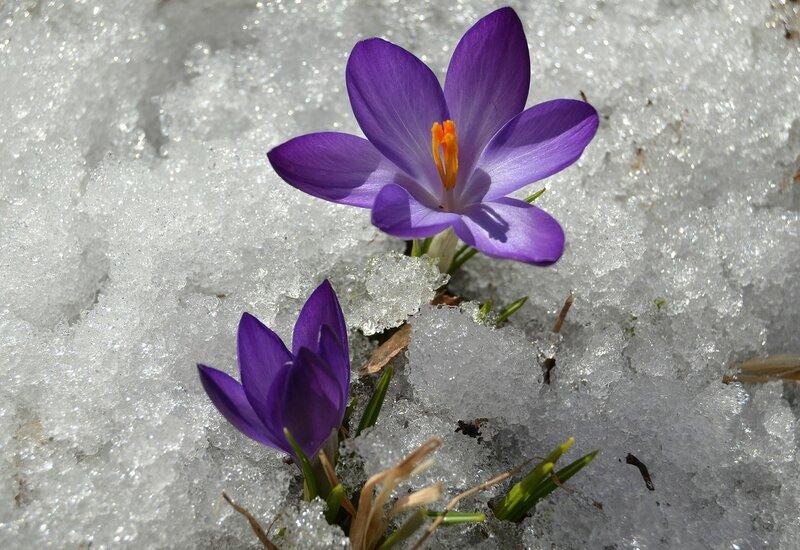 Тает снег, растут цветы. ..