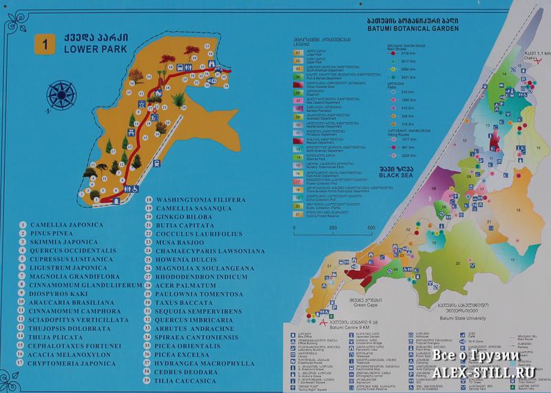 Карта ботанического сада в Батуми