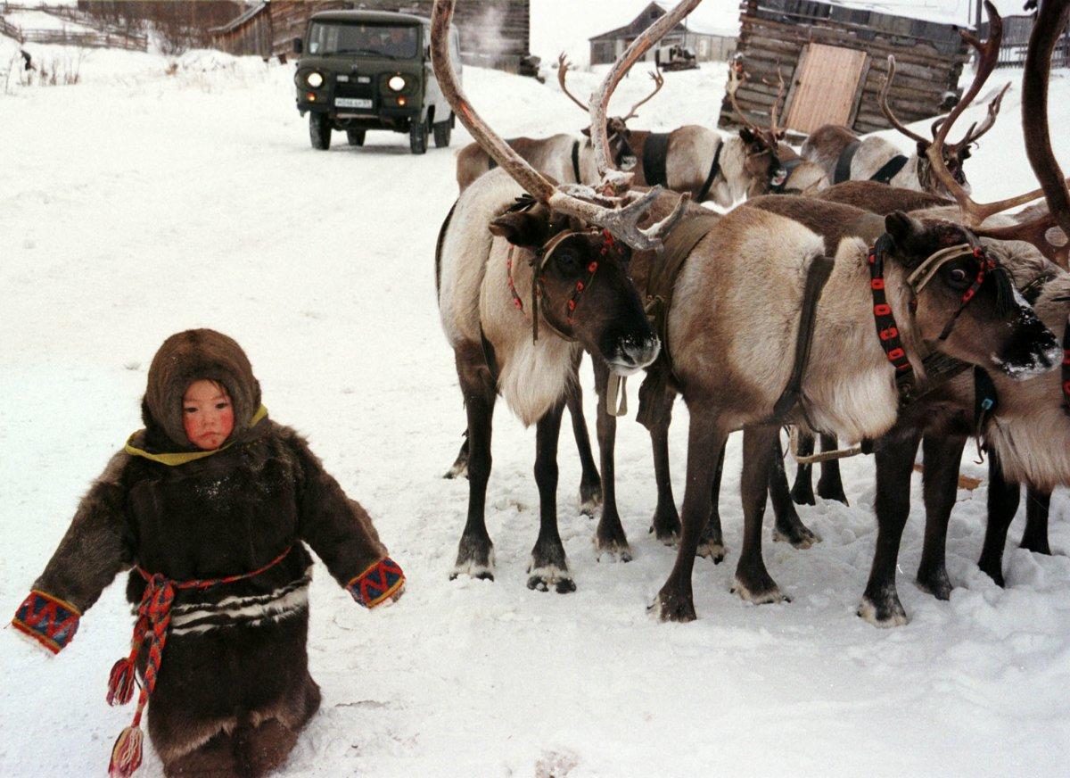 Девочка из народа ханты проходит мимо оленей в минус 30 в селе Аксарка, 2 тысячи километров от Москв