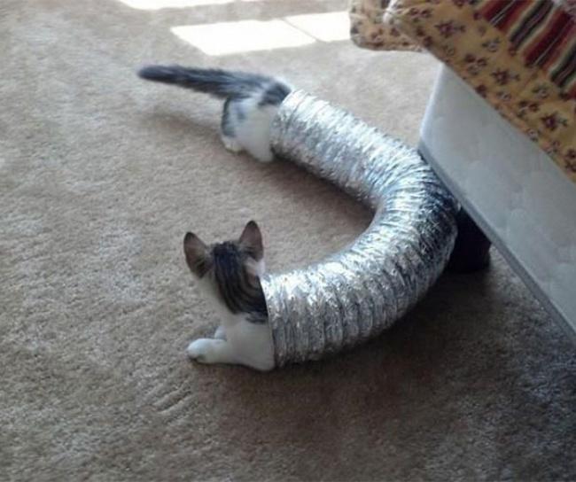 Супердлинный кот!