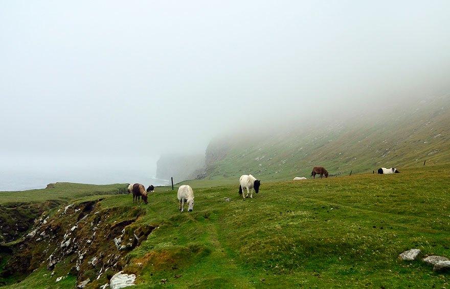 Миниатюрных шетландских пони тренировали даже как лошадей-поводырей для выполнения таких же функций,