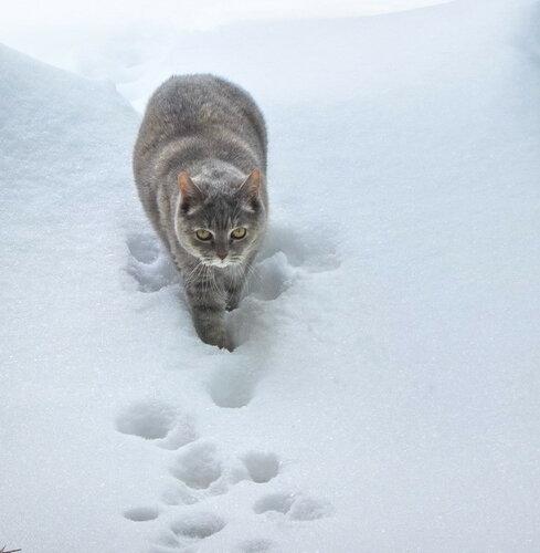 по снегам