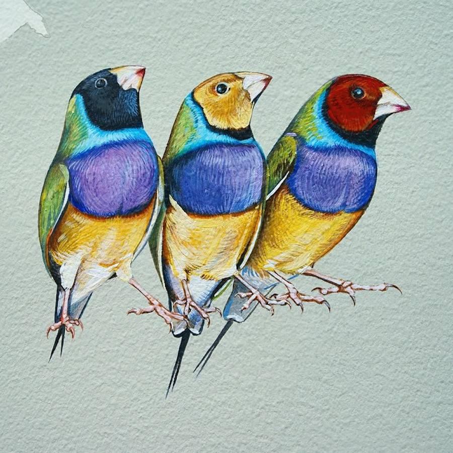 Scientific Illustrator Paints Giant Murals Featuring 243 Bird Families