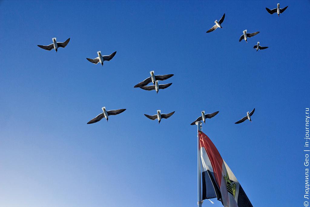 чайки на Красном море