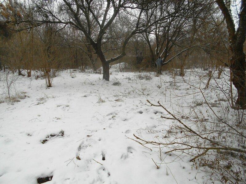 Зима, лес, снег ... DSCN0819.JPG
