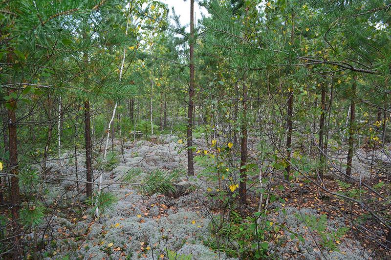 леса 8.jpg